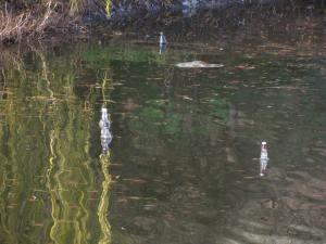 Contaminación y deseos pendientes