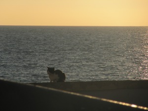 Un gato andaluz