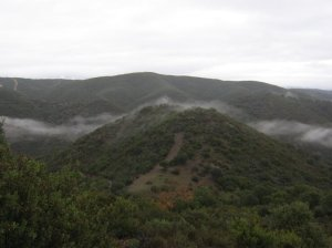 Niebla Morena