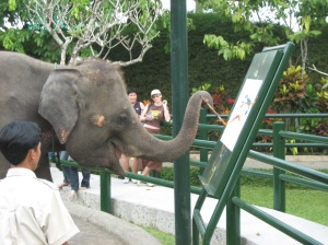 ElephantArtist