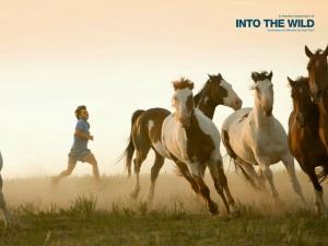 into-the-wild-horses-731087