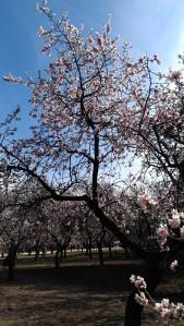 """""""(...) La primavera dulce que me enseñara a amarte, la primavera misma que me ayudó a lograrte."""""""