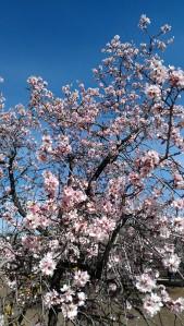 Mientras haya en el mundo primavera, ¡habrá poesía!