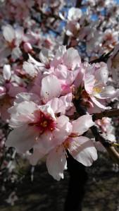 Si así es la flor, que no llegue mayo.